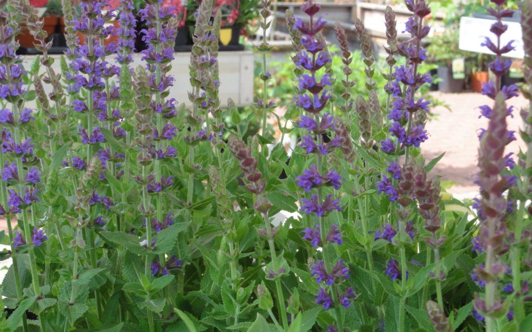 Juni Impressionen aus der Gärtnerei