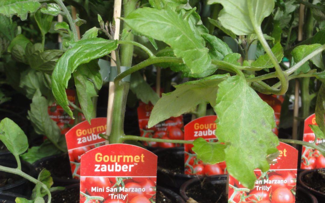 Vitamine zum Auspflanzen